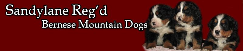 Sandylane Reg'd Bernese Mountain Dogs - About Us
